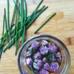 Chive Blossom Vinegar Recipe // Dula Notes