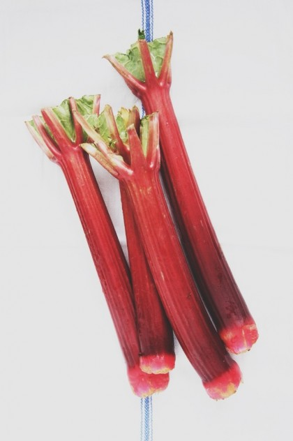 Seasonal Snapshots - Rhubarb // Dula Notes