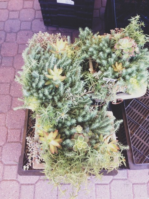 Succulents at the Holland Farmers Market // Dula Notes