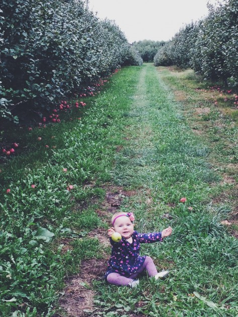 Crane's Apple Orchard in Fennville, Michigan // @nicoledula