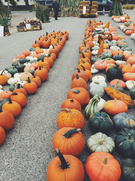 Fall 2015 Seasonal Snapshots // @nicoledula